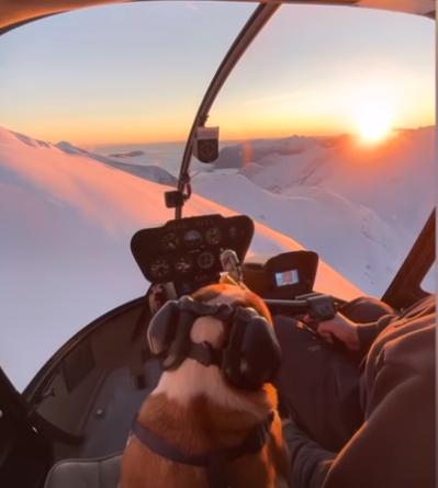 HIT! Pies w helikopterze zachwyca internautów. Wojciechowska zauroczona. [WIDEO]